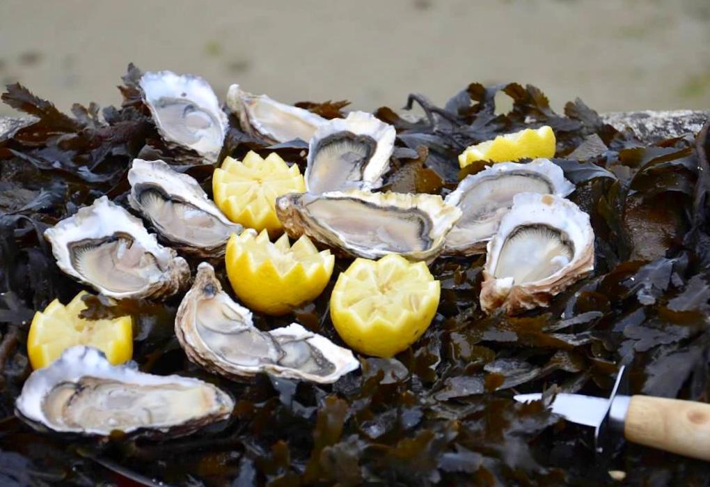 oysters, beach