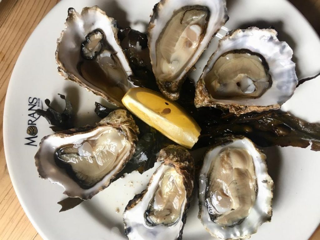oysters, ireland, galway